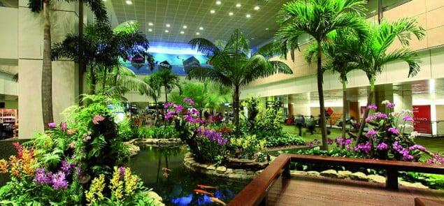 Na topie, lotnisko Changi, Singapur