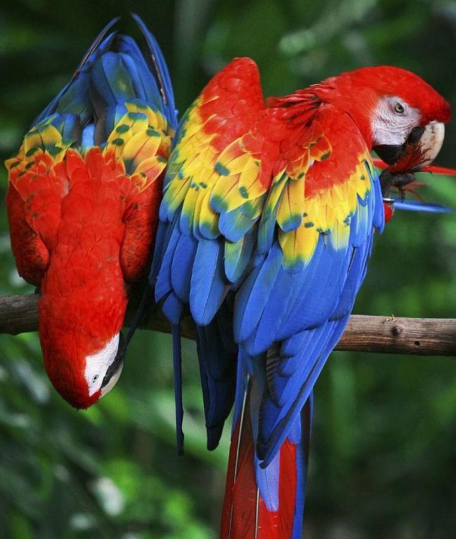 """Amazonia to królestwo przyrody - szacuje się, że co dziesiąty znany gatunek """"mieszka"""" w amazońskiej dżungli Fot.iStock"""