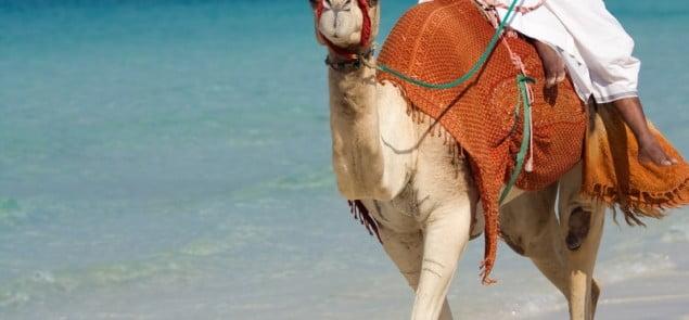 W Dubaju tradycja łączy się z hipernowoczesnością. Fot. Bigstock