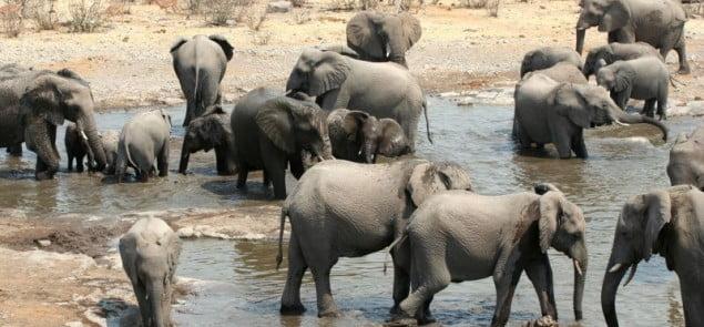 Fot.Marta i Philip Smaruj, www.wildwindsafaris.com