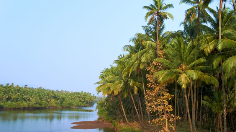 Scenic view of wild tropical jungle