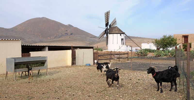 Goat farm with traditional windmill, Canary Island Fuerteventura