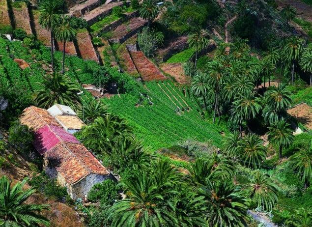 Kanary, Granja , Vallehermoso (Isla de la Gomera)