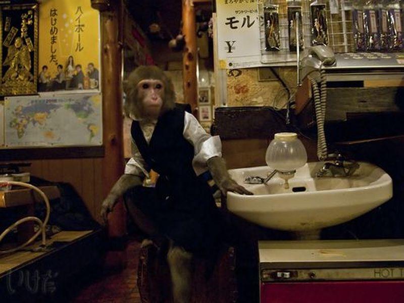 Małpa kelner