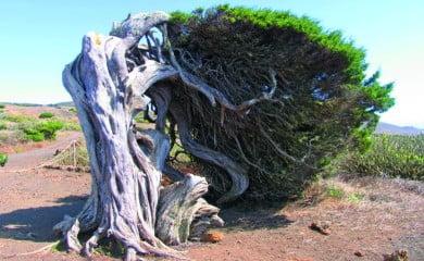Największym skarbem wyspy jest jej dziewicza przyroda. W 2000 r. El Hierro, obok La Palmy, Lanzarote i Fuerteventury, zostało uznane za Rezerwat Biosfery UNESCO.