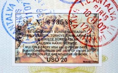 Wiza turecka. Fot. Fotolia.com