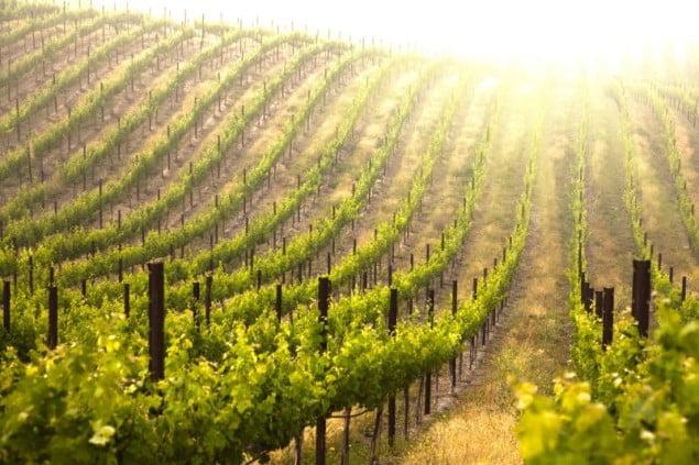grecja winnice