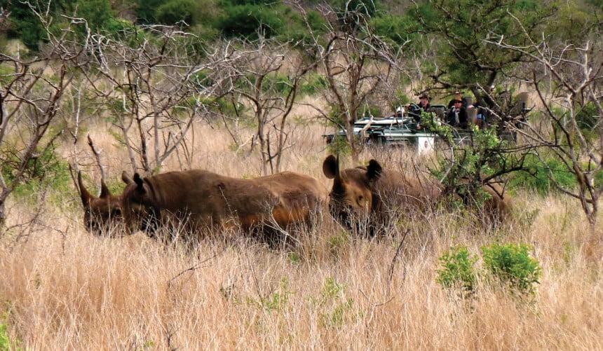 Możemy tu zobaczyć m.in. bawoła, lamparta, nosorożca, lwa i słonia, do których doprowadzą nas doświadczeni lokalni przewodnicy.