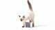 PETCUBE Cena: ok. 700 zł;  petcube.com Jeśli podczas wyjazdów służbowych zamartwiamy się losem naszego psa, kota lub chomika, które musieliśmy zostawić wdomu, to warto zaopatrzyć się wPetcube. Ta elegancka kamera waluminiowej obudowie (10,2 cm x 10,2 cm x 10,2 cm, 590 g) łączy się znaszym domowym Wi-Fi, umożliwiając śledzenie tego, co właśnie porabia nasz czworonożny przyjaciel. Petcube współpracuje zurządzeniami działającymi pod systemem Android iiOS, posiada wbudowany głośnik imikrofon, szerokokątny obiektyw oraz opcję nagrywania wideo wjakości HD. Teraz już od razu będziemy wiedzieli, kto ikiedy zabrudził nasz śliczny dywan.