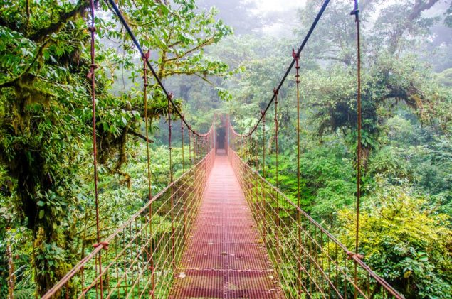 Bridge in Rainforest - Costa Rica - Monteverde