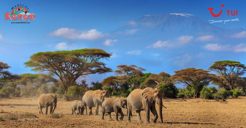 safari w Kenii